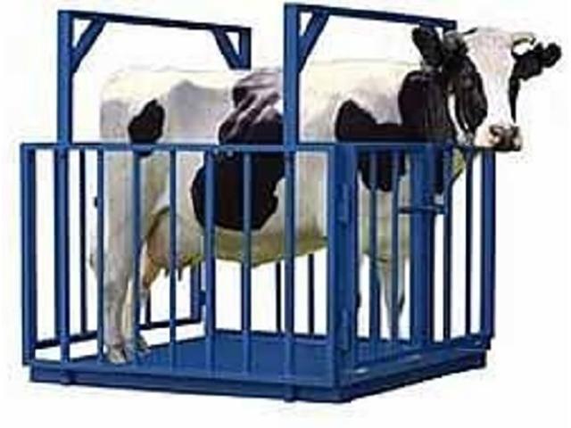 Весы для животных ВСП4-1000АЖСО-1220
